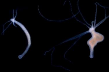 [AUSTRALIA] When tumors redesign species interactions